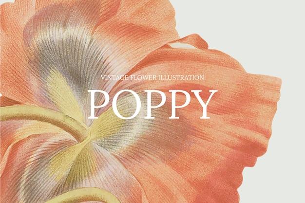 Plantilla de flor dibujada a mano con fondo de amapola, remezclada de obras de arte de dominio público