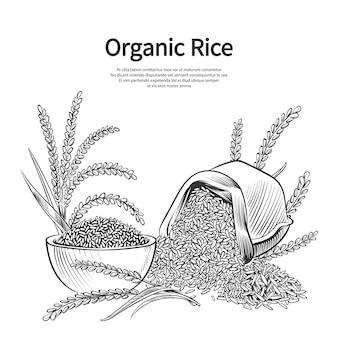 Plantilla de fondo de arroz dibujado a mano