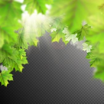 Plantilla de hojas de verano.