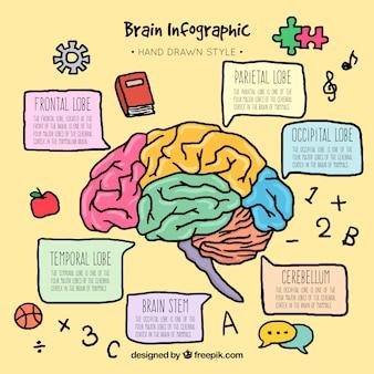 Plantilla infográfica de cerebro colorida dibujada a mano