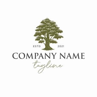 Plantilla de logotipo de árbol de arce dibujado a mano vector premium