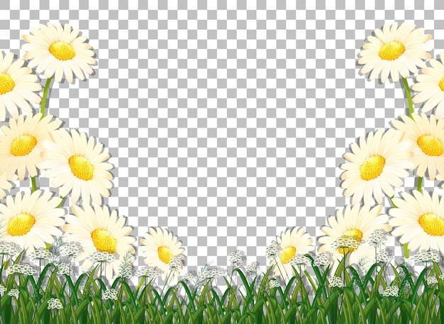 Plantilla de marco de flores blancas sobre fondo transparente