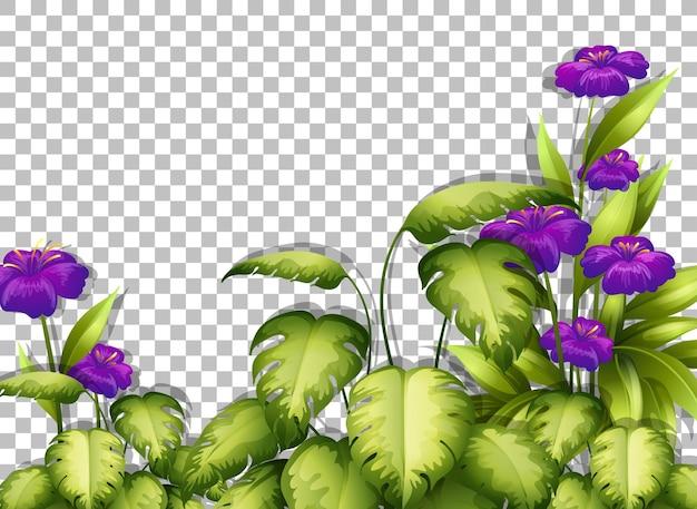 Plantilla de marco de flores y hojas moradas sobre fondo transparente