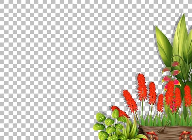 Plantilla de marco de flores sobre fondo transparente