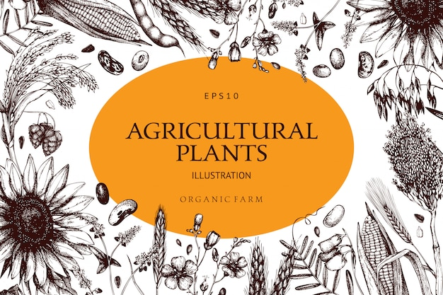 Plantilla de plantas frescas y orgánicas de granja. fondo de plantas de legumbres y cereales bosquejado a mano