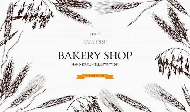 Plantilla de plantas frescas y orgánicas de granja. mano bosquejó cultivos de cereales. logotipo de panadería