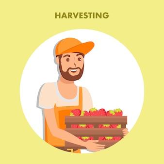 Plantilla de póster de cosecha de fresas