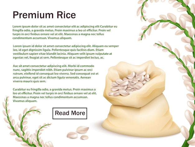 Plantilla publicitaria realista de arroz, granos y espigas