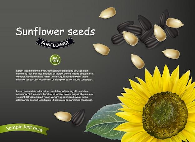 Plantilla de semillas de girasol