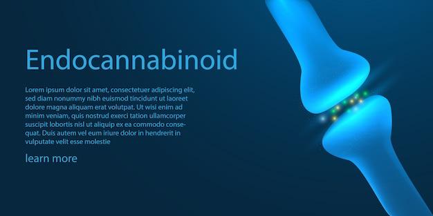 La plantilla del sistema endocannabinoide