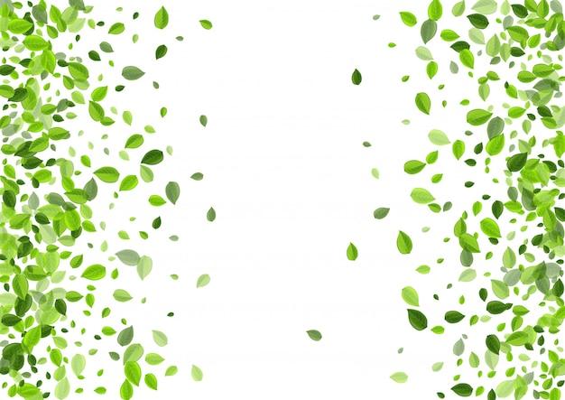 Plantilla de vector de hierbas de hoja verde. hojas del bosque