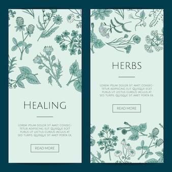 Plantillas de banner web de hierbas medicinales dibujadas a mano