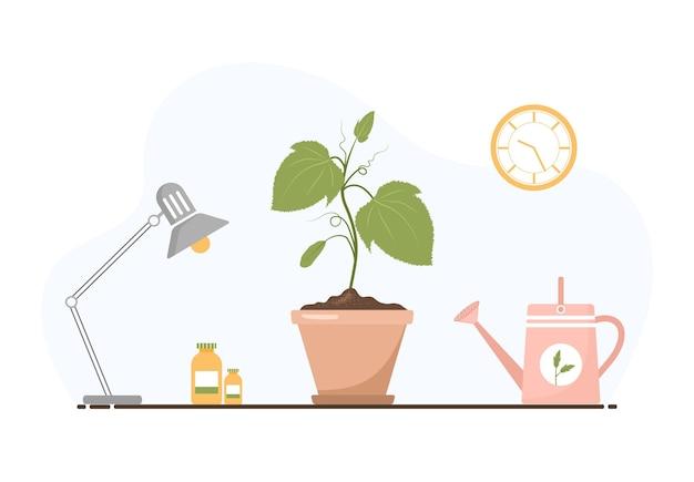 Plántula de pepinos en una olla. cultivo de plantas de jardinería.
