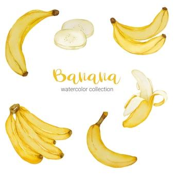 Plátano en colección de acuarela, lleno de fruta y cortado en trozos y cáscara