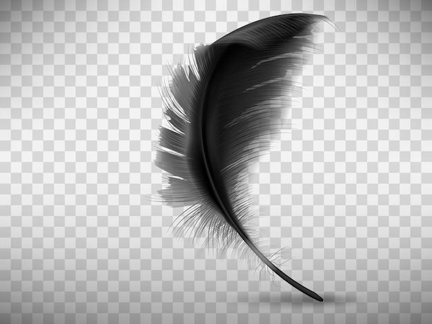 Pluma negra esponjosa con sombra realista