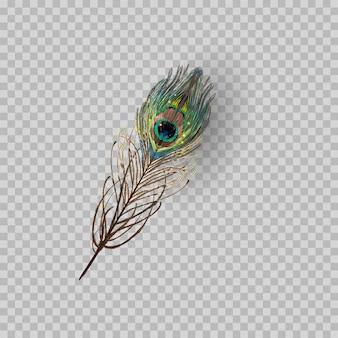 Pluma del pavo real en fondo transparente.