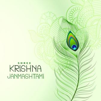 Pluma de pavo real para shree krishna janmashtami