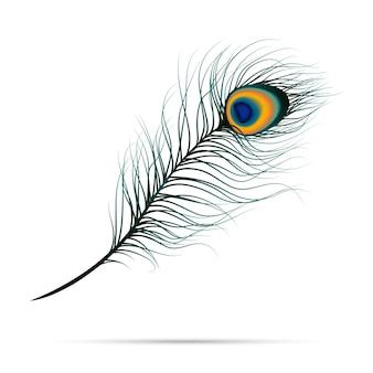 Pluma de pavo real sobre fondo aislado