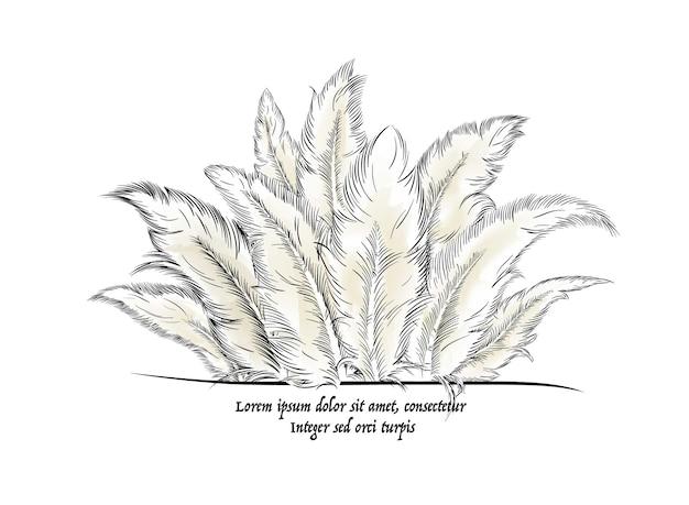 Plumas con texto. ilustración vectorial