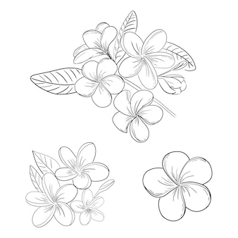 Plumeria o conjunto de dibujo de ilustración de flor de frangipani
