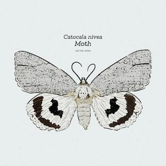 La polilla de catocala es un género de polillas generalmente holártico en la familia erebidae, dibujo lineal vintage o ilustración de grabado.