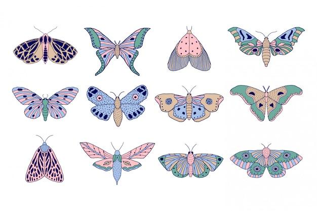 Polillas y mariposas coloridas