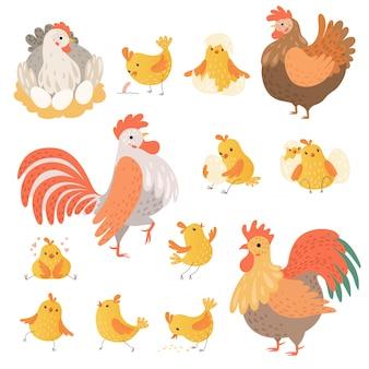 Pollo y gallo. divertidos animales de granja domésticos pájaros huevos pollo personajes de dibujos animados