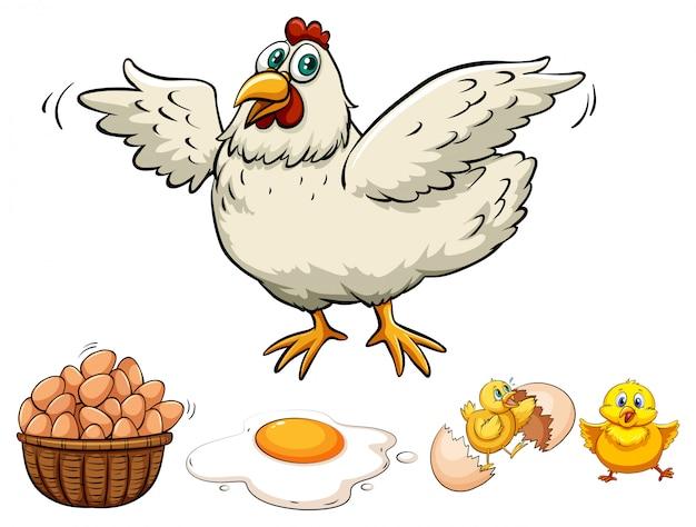 Pollo y huevos en canasta