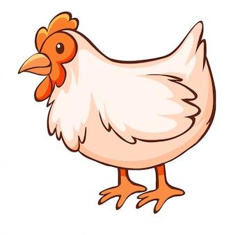 Pollo sobre fondo blanco