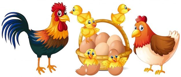Pollos y pollitos con canasta de huevos.