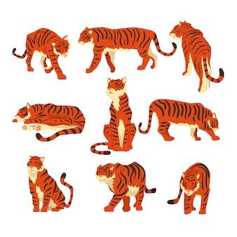 Potente tigre en diferentes acciones conjunto de ilustraciones de dibujos animados aisladas sobre fondo blanco