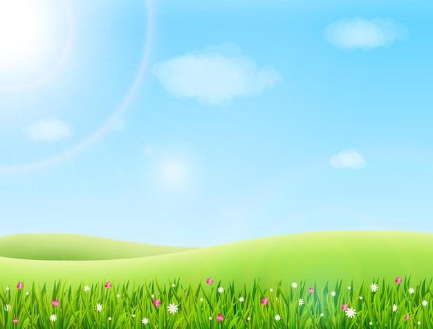 Prado de verano con ilustración de hierba verde