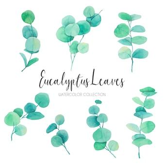 Precioso acuarela de hojas de eucalipto