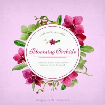 Precioso marco de orquídeas florecientes