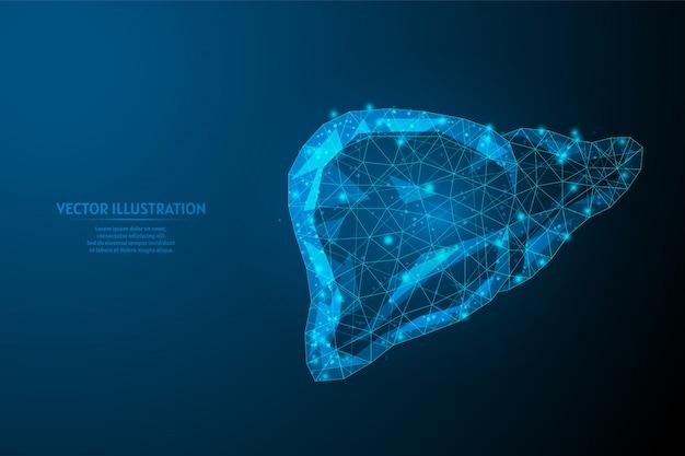 Primer plano de hígado humano. anatomía del órgano. diagnóstico de la enfermedad cirrosis, cáncer, intoxicación, hepatitis. medicina y tecnología innovadoras. ilustración de estructura metálica de baja poli 3d.