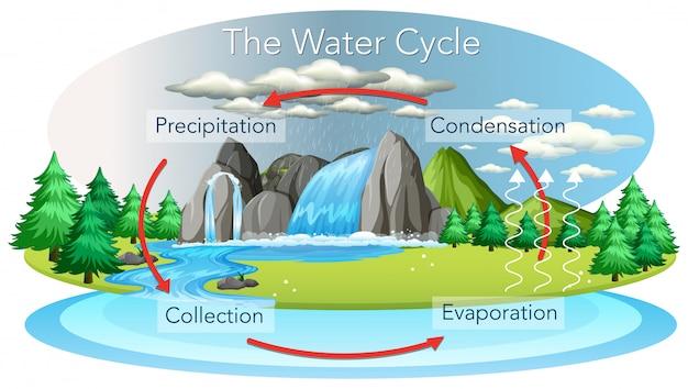 Proceso del ciclo del agua en la tierra.
