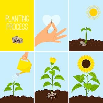 Proceso de plantación de flores.