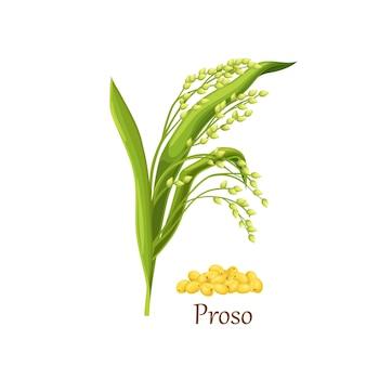 Proso mijo panicum miliaceum pico, planta agrícola