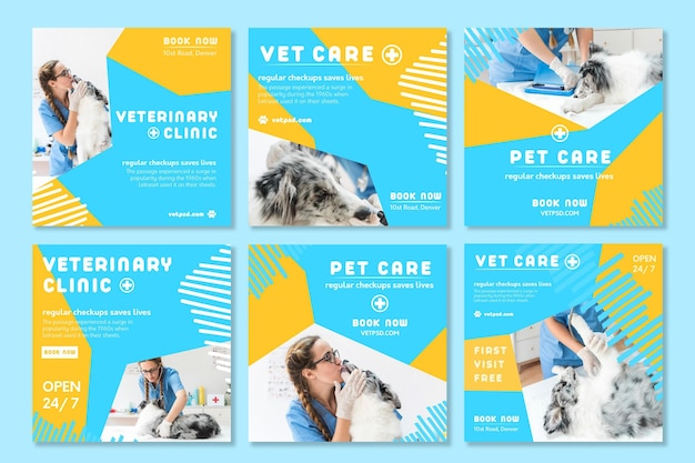 Publicaciones de instagram veterinarias