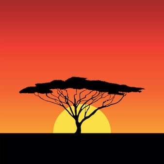 Puesta de sol de áfrica