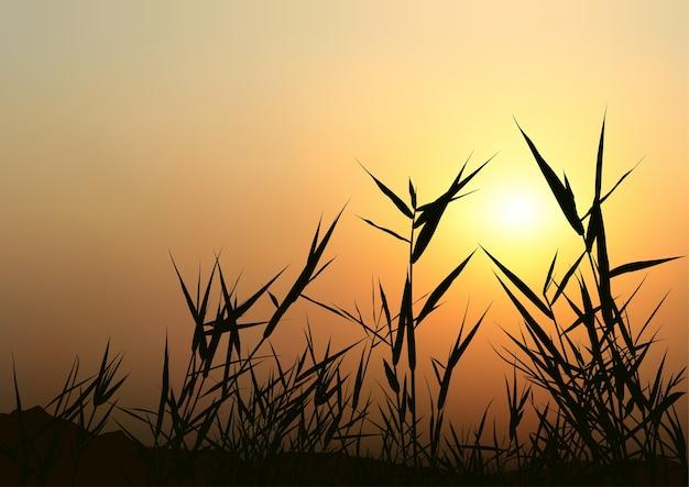 Puesta de sol y siluetas de hierba