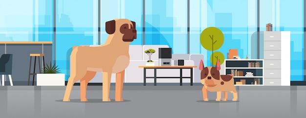 Pug y bulldog francés de pie juntos amigo humano hogar mascota concepto moderno salón interior animales de dibujos animados horizontal longitud completa