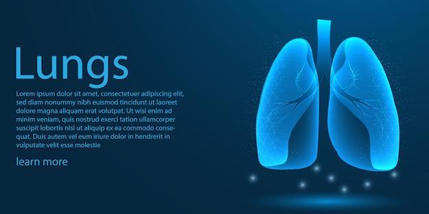 Pulmones humanos médicos, concepto de baja poli.