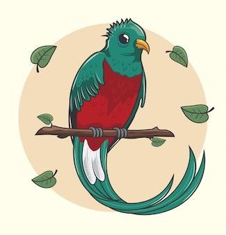 Quetzal pájaro de dibujos animados lindo
