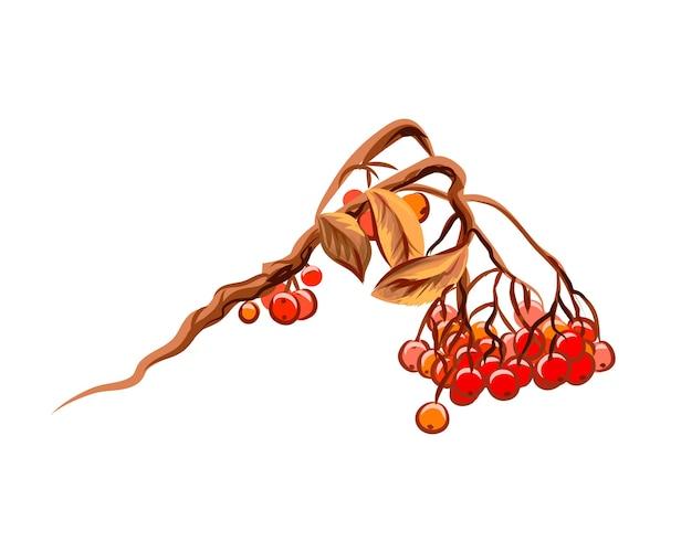 Racimo de bayas de serbal con salpicaduras de acuarelas. boceto dibujado a mano. ilustración de pinturas