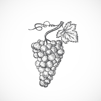 Racimo de uvas con hojas y brotes ilustración dibujada a mano. bosquejo abstracto de frutas o bayas.