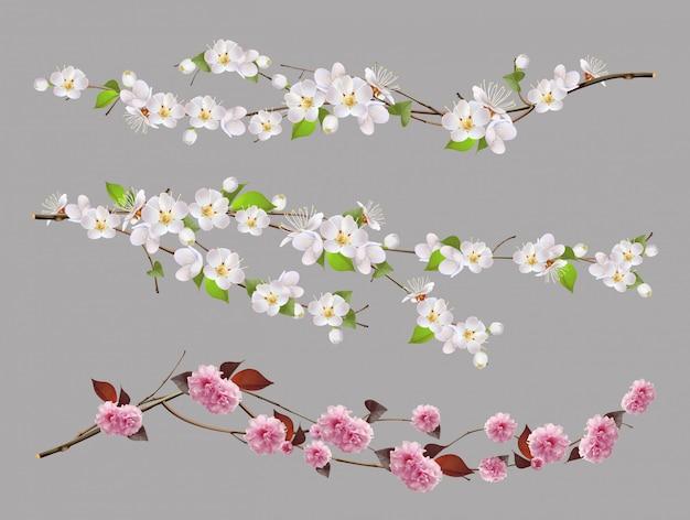 Rama de árbol, flores de primavera conjunto 3d