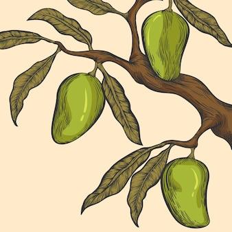 Rama de árbol de mango botánico dibujado a mano