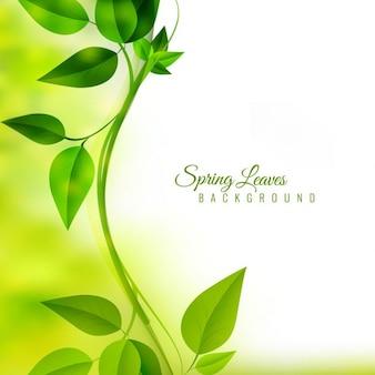Rama con hojas verdes en fondo desenfocado