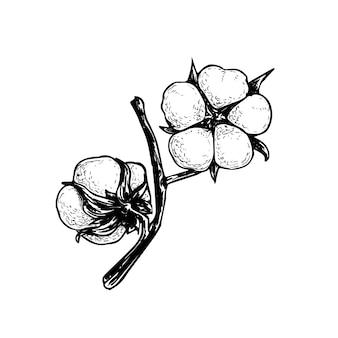 Rama de flor de algodón con capullos esponjosos. ilustración de estilo boceto dibujado a mano de algodón ecológico natural. vintage grabado. arte botánico sobre fondo blanco.
